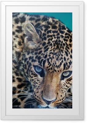 Poster in Cornice Leopardo