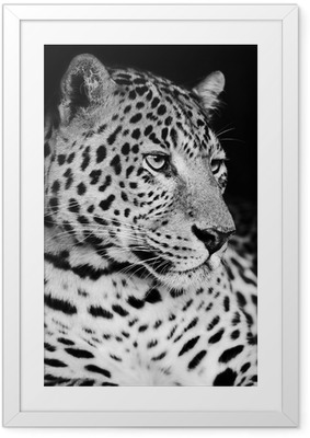 Gerahmtes Poster Leopard