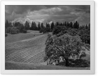 Poster en cadre Agiter Ridge Ranch Vineyards - Paysages