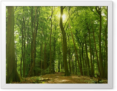 Sonniger Sommerwald Framed Poster
