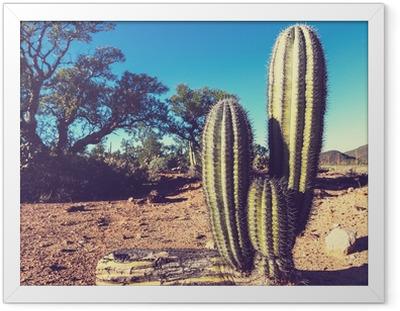 Innrammet plakat Kaktus i Mexico