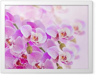 Poster i Ram Rosa orkidé gren närbild