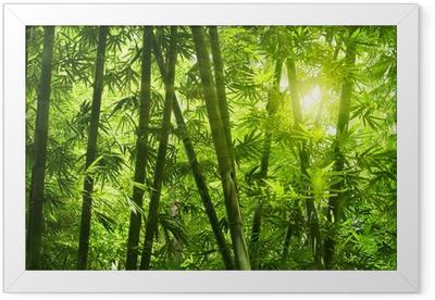 Plakat w ramie Bambusowy las