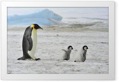 pingvin dejtingsajt