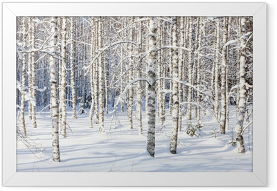 Gerahmtes Poster Snowy Birkenstämmen