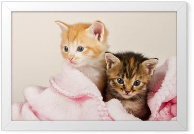 Poster en cadre Deux chatons dans une couverture rose