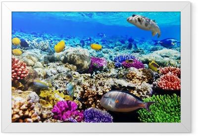 Gerahmtes Poster Korallen und Fische im Roten Meer. Ägypten, Afrika.