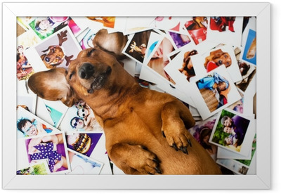 Cute dog among the photos Framed Poster