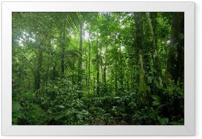 Gerahmtes Poster Tropischer Regenwald-Landschaft, Amazon