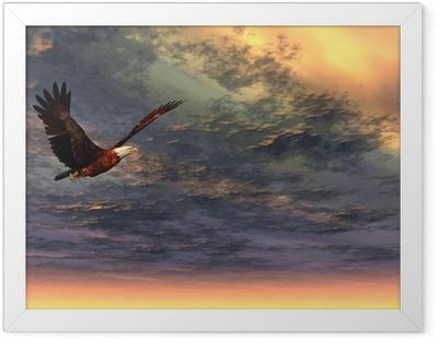Poster en cadre Aigle