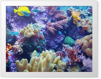 Ingelijste Poster Barriera Corallina 2