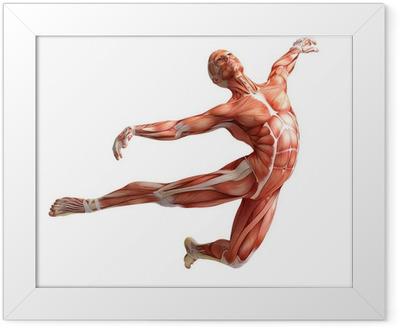 Anatomia, lihakset Kehystetty juliste