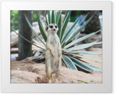 Gerahmtes Poster Meerkat Familie sind Sonnenbaden