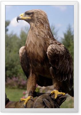 Poster en cadre Portrait de profil de la belle aigle royal - Thèmes