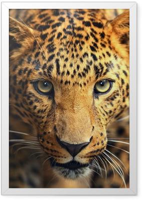 Gerahmtes Poster Leopard Portrait