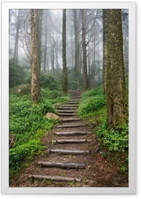 Póster com Moldura Forest path