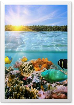 Ingelijste Poster Zonsondergang en kleurrijke onderwater leven in zee