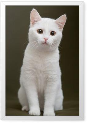 Poster en cadre Beau chat blanc avec des yeux jaunes assis sur la couverture