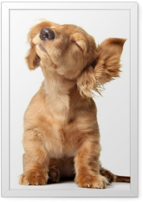 Cute puppy listening to music, also available with headphones. Framed Poster