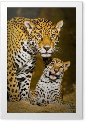 Poster en cadre Jaguar Cubs