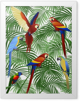 Papegøjefugl Indrammet plakat