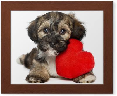 c22adca2687 Obraz na plátně Lover Valentine Havanský psík štěně s červeným srdcem •  Pixers® • Žijeme pro změnu