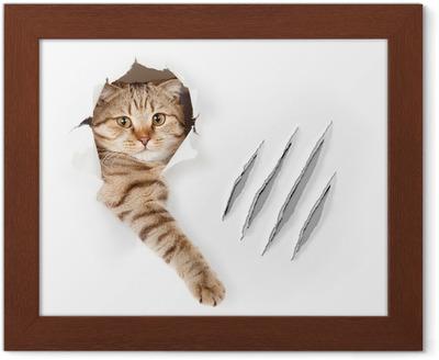 Vysoká def kočička
