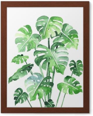 Conjunto de hojas de monstera  Hermosa acuarela de hojas de una planta  tropical  Ideal para estampados, decoración e interiorismo  aislado en  blanco