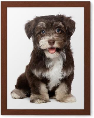 738117db448 Obraz na plátně Krásná usměvavá čokoládovou havanský psík štěně • Pixers® •  Žijeme pro změnu