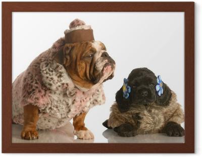 Gratis billeder : hundehvalp, dyr, kæledyr, frakke, snude