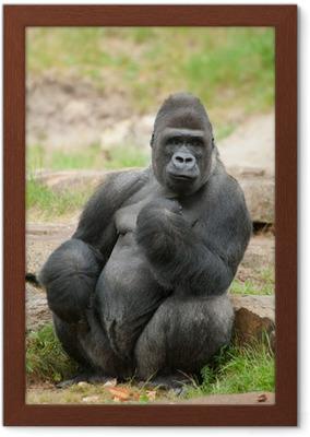 bf805cd3d605b Fototapete Männlichen Gorilla Silberrücken • Pixers® - Wir leben