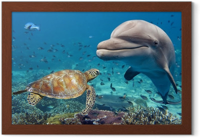 Poster in Cornice Delfino e tartaruga subacquea sulla barriera