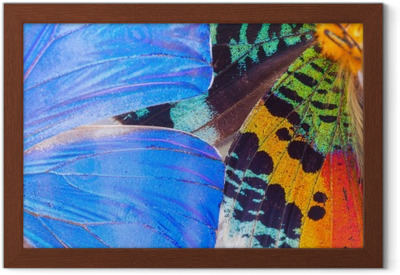 Multicolored butterflies wing Framed Poster