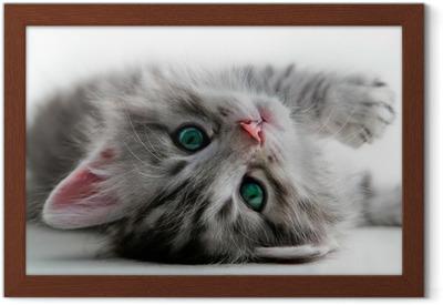 Poster en cadre Reste Kitten - isolé