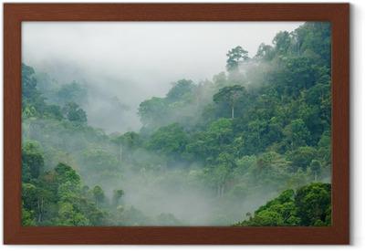 Poster in Cornice Foresta pluviale mattina nebbia