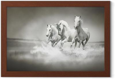 Poster en cadre Troupeau de chevaux blancs qui traverse l'eau
