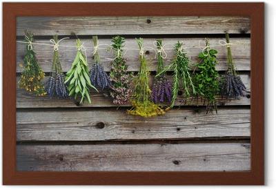 Póster com Moldura Herbs drying on the wooden barn in the garden