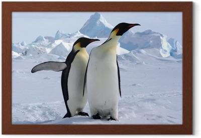 Gerahmtes Poster Aber wo ist der Südpol? (Emperor Penguins / Antarktis)