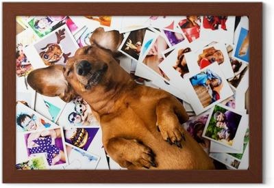 Ingelijste Poster Leuke hond onder de foto's