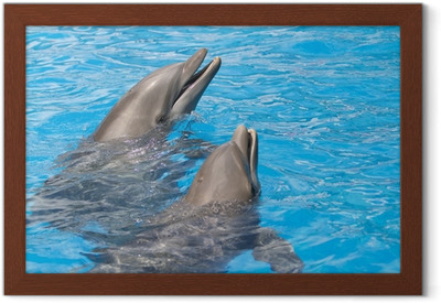 Poster delfini u2022 pixers® viviamo per il cambiamento