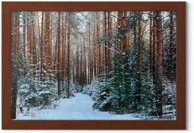 Plakat w ramie Sosnowy las, zima, śnieg