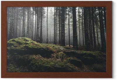 Vildmark landskap skog med tallar och mossa på stenar