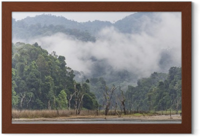 Morning fog and dead trees in dense tropical rainforest, Perak, Malaysia Framed Poster