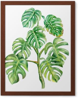 Poster i Ram Grön monstera blad isolerad på vit bakgrund. handmålade akvarell illustration. realistisk botanisk konst. mall