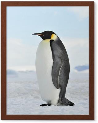Gerahmtes Poster Emperor Penguin