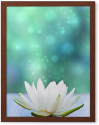 white water lilly flower Framed Poster