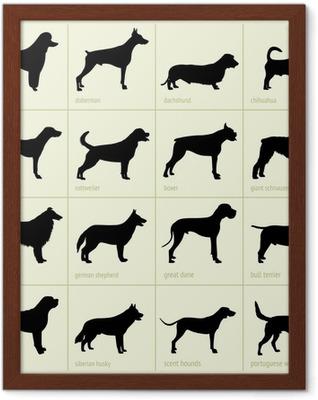 Poster en cadre Différentes races de chiens - Mammifères