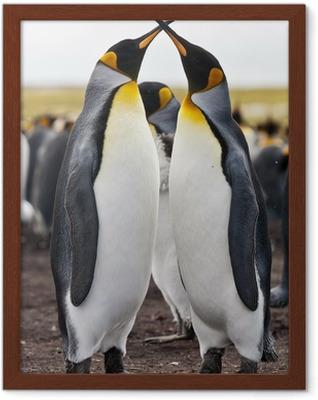 Gerahmtes Poster Paar Königspinguine