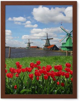 Poster i Ram Traditionella holländska väderkvarnar med röda tulpaner, Amsterdam, Holland