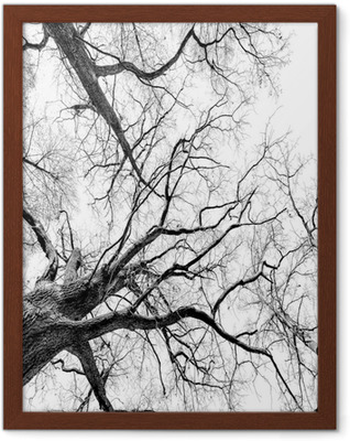 Ingelijste Poster Trees